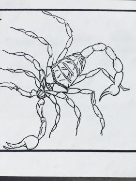 Scorpion illustration for craft activity